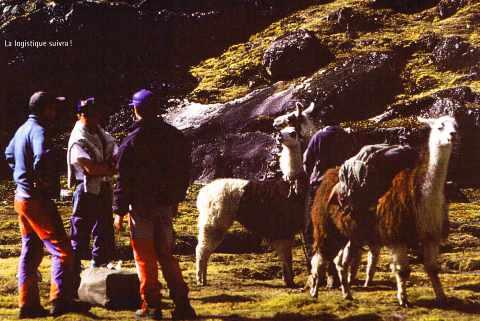 Quelques lamas dans les Andes