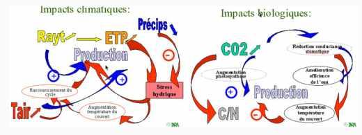 Schéma synthétique des impacts sur la production agricole
