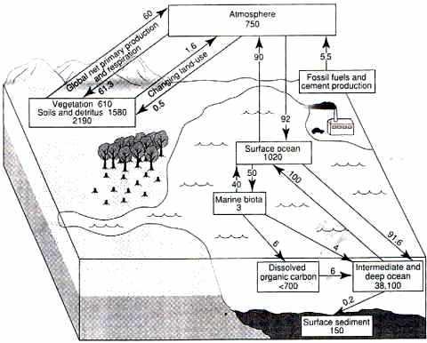 Flux et stocks de carbone en gigatonnes