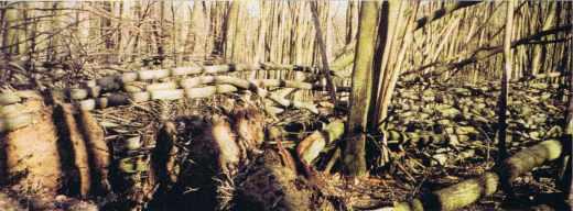 La forêt vue par un assureur
