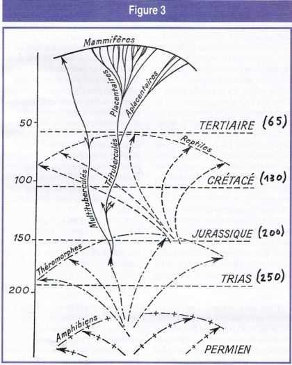 Développement en nappes des tétrapodes.