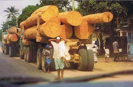 Transport de grumes (sapelli)  au Congo