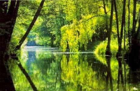 Le Marais poitevin dans les environs de Coulon (Deux-Sèvres).