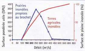 Modèle hydraulique d'écoulement de la Seine propice à la reproduction des brochets