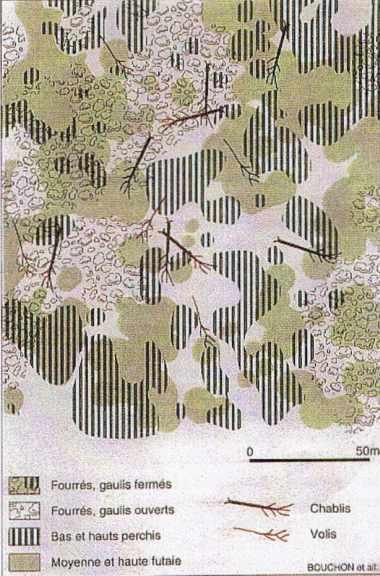 Cartographie des peuplements naturels en hêtraie (réserve biologique de la Tillaie en forêt de Fontainebleau)