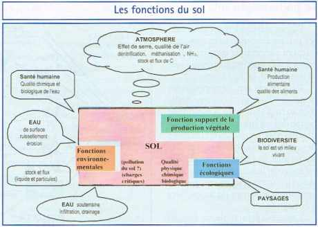 Les fonctions du sol