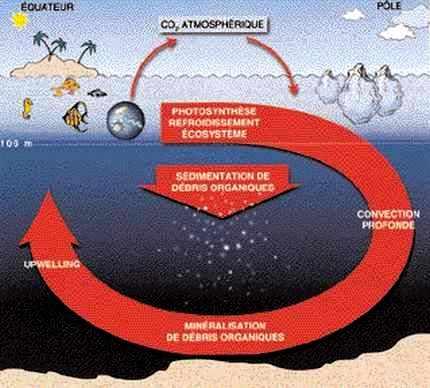 Le cycle du carbone dans l'océan