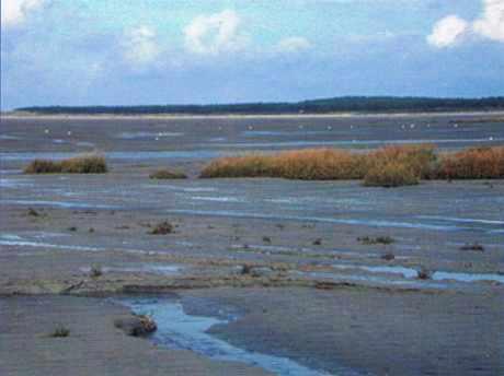 Estran en baie de Somme