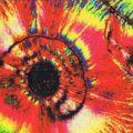 Photo en microscopie optique polarisante d'une glace à la pomme