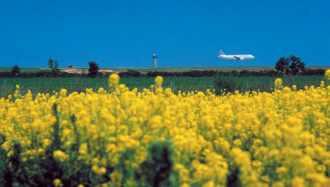 Atterrissage devant un champ de colza
