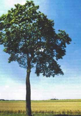 La campagne tranquille avec un arbre