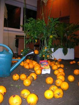 Des oranges dans le bureau du Directeur des études