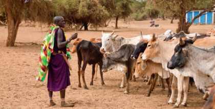 Troupeau en Afrique