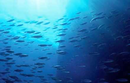 Des poissons en mer