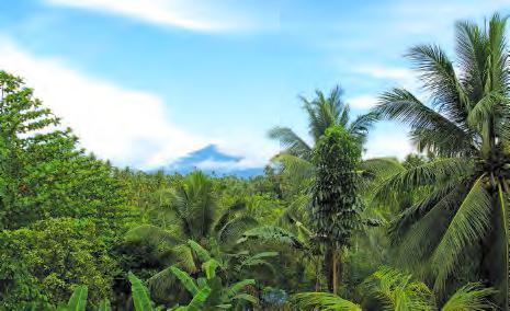 Vue du volcan Klabat depuis le campus de l'université De La Salle