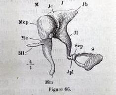 Extraits de Gavarret, Phénomènes physiques de la phonation et de l'audition : figure 2