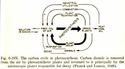 Le cycle du carbone dans la photosynthèse