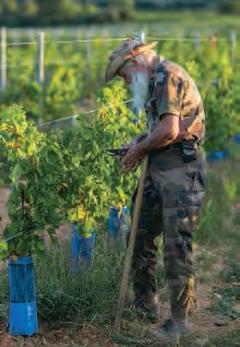 Un ancien légionnaire dans la culture des vignes