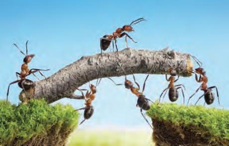 Des fourmis donnent l'exemple