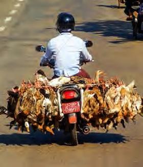 Deux-roues en Birmanie