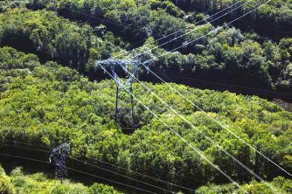 Ligne électrique en forêt