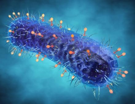 Bactériophage, virus, infectant les bactéries