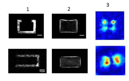 Forces exercées par une cellule sur sa matrice