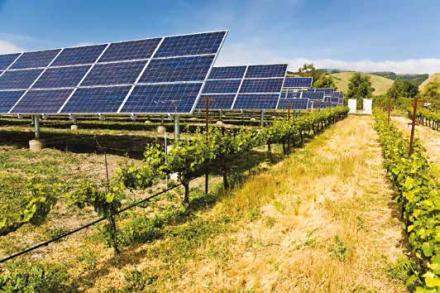 Des panneaux photovoltaïques au-dessus des vignes.