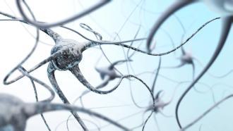 Réseau neuronal du cerveau