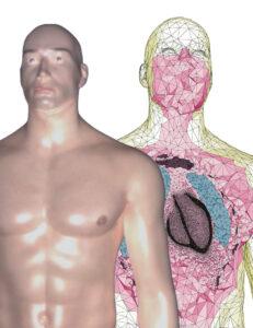 Mécanique en cardiologie : Jumeau numériquepour la simulation cardiaque.