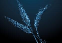 Le numérique, problème environnemental ou solution ?