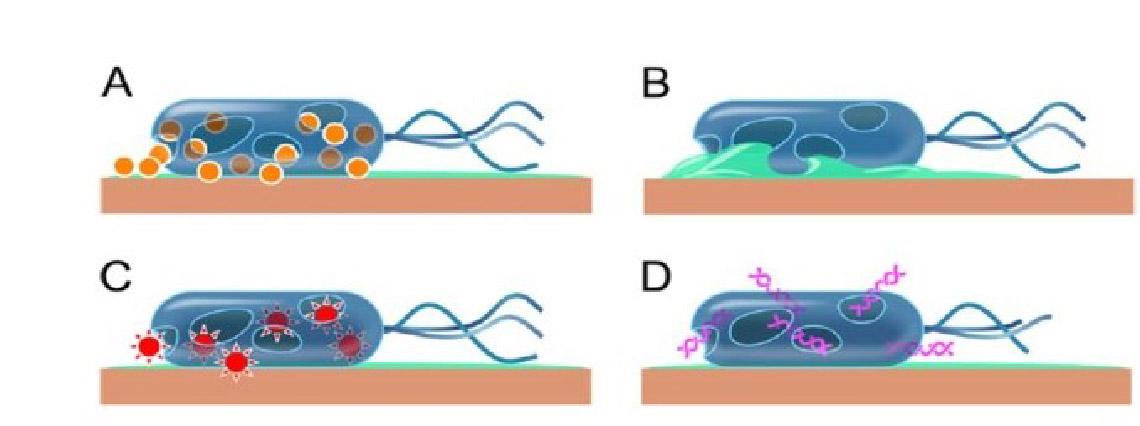 Les bénéfices du cuivre sur la santé : un puissant bactéricide et virucide…