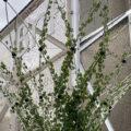 Végétalisation urbaine par des corolles à la BNF