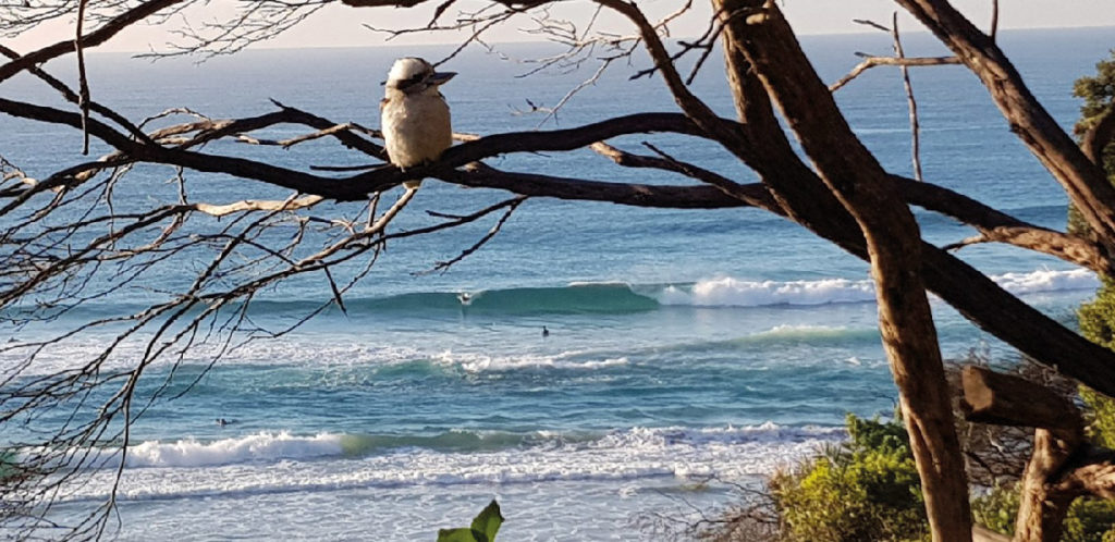 A Sydney la nature est toujours proche
